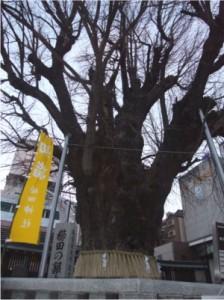 櫛田の銀杏