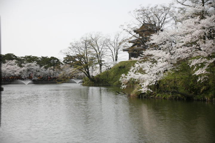堀と桜と三重櫓