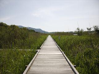 湿地の中を歩く